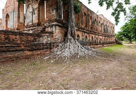 Big Tree With Roots Several Decades Old And The Old Brick Wall Attracts Visitor, Ayutthaya, Thailand