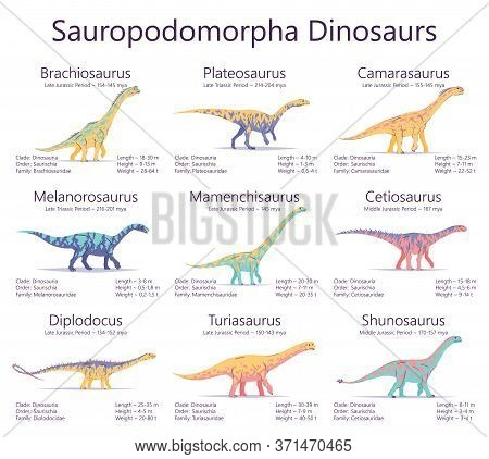 Sauropodomorpha Dinosaurs. Colorful Vector Illustration Of Dinosaurs Isolated On White Background. S
