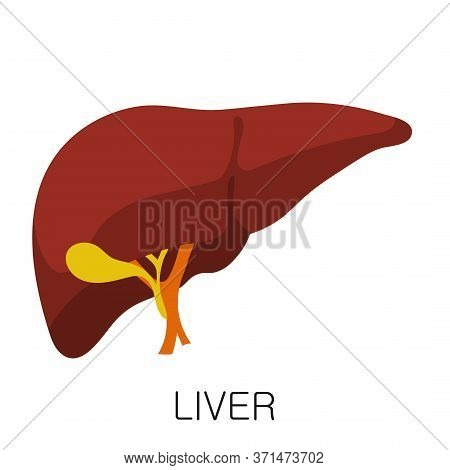 Liver Icon In Flat Style Isolated On White Background. Human Anatomy Medical Organ Vector