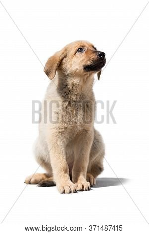 Little Fluffy Dog Puppy On A White Isolated Background.