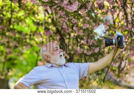 Selfie Time. Photographer Man Take Sakura Cheery Blossom Photo. Cherry Blossoming Garden. Photograph
