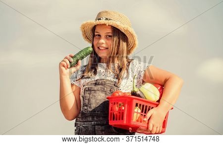 Family Farm. Girl Adorable Child Farming. Harvest Season. Child Carry Harvest. Buy Organic Food. Sun
