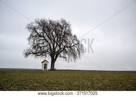tree with chapel in winter