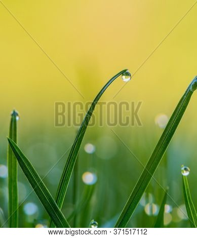 drops of dew on a blade of grass