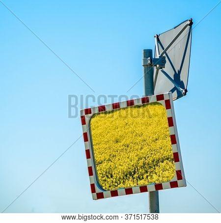 a rape field in a traffic mirror