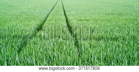 tire tracks in a field