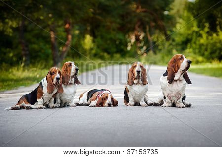 group of dogs basset hound