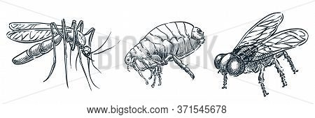 Bloodsucking Insect Parasites Icons. Vector Hand Drawn Sketch Dangerous Bugs Illustration. Mosquito,