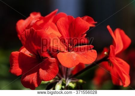 Red Flowers With Exploding Colors And Blurred Background