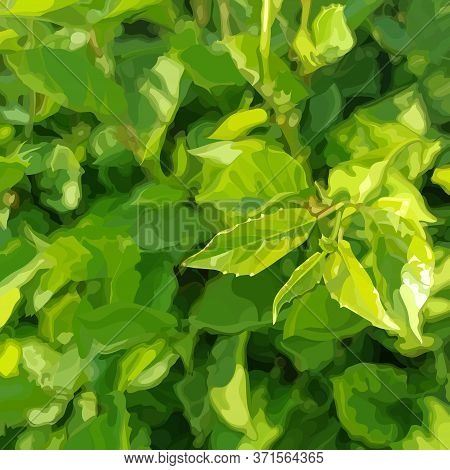 Square Green Summer Dense Vegetation Background With Young Leaves. Vector Image