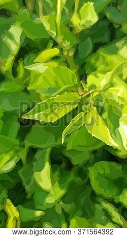 Vertical Green Summer Dense Vegetation Background With Young Leaves. Vector Image