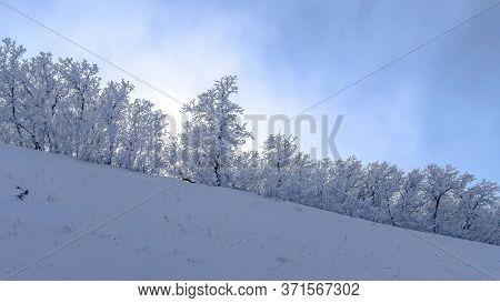 Panorama Wasatch Mountain Terrain With Frosted Trees On Snow Covered Slope In Winter