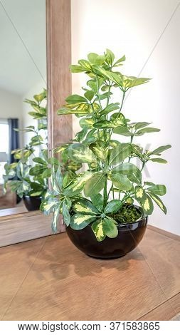 Vertical Ornamental Potted Plant On The Vanity Cabinet Against Mirror And White Wall