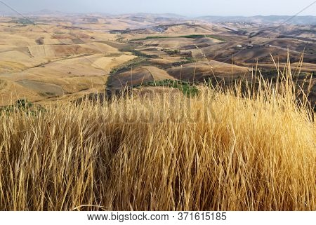 golden grass, on background blurred scenic view of Sicily summer agriculture