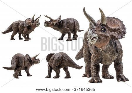 Triceratops  ,dinosaur On White Background  . Triceratops  ,dinosaur On White Background  .