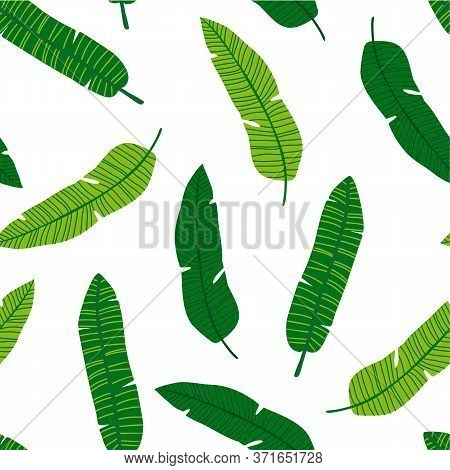 Banana Leaf Pattern. Tropic Palm Tree Leaves Seamless Pattern. Vector Illustration.