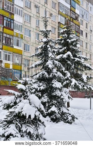 Three Christmas Trees In The Snow Against The Background Of A Residential Multi-storey Building. Tre