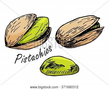 Dry Fruits Pistachio Nuts Hand Drawn Illustration Vector. In Shell Pistachios And Peeled Nuts. Sketc