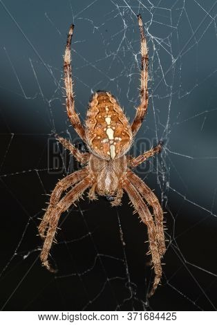 Close Up Of Spider On Its Cobweb, Hairy Spider