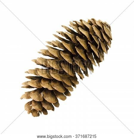 Pine Cone Isolated On A White Background. Item For Decoration, Greeting Cards, Packaging, Scene Crea