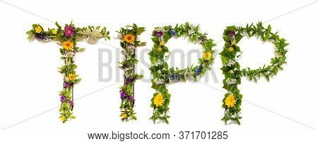 Flower And Blossom Letter Building Word Tipp Means Tip