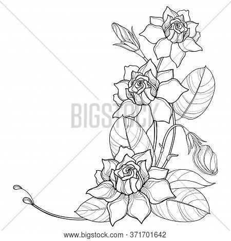 Vector Corner Bouquet With Outline Gardenia Flower, Bud And Ornate Leaf In Black Isolated On White B