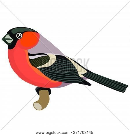 Bullfinch With A Red Breast In A Natural Style Sits On A Branch, Isolated Object On A White Backgrou