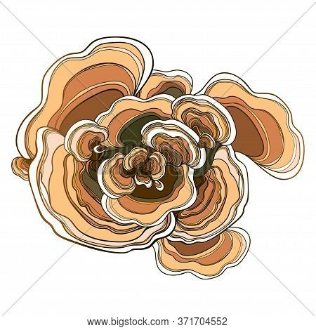 Vector Bunch With Outline Trametes Or Coriolus Versicolor Or Ornate Turkey Tail Mushroom In Brown An