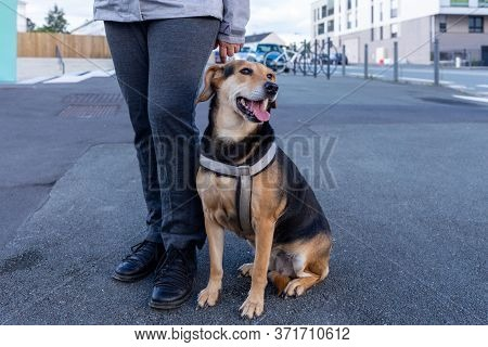 Owner And Happy Dog, Dog With Leash Is Waiting For Walk, Companion Dog, Sunlight,