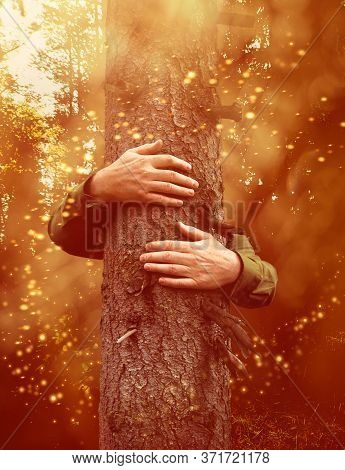 Hands Around An Old Tree Trunl, Hugging In Magical Forest, Environmental Concept