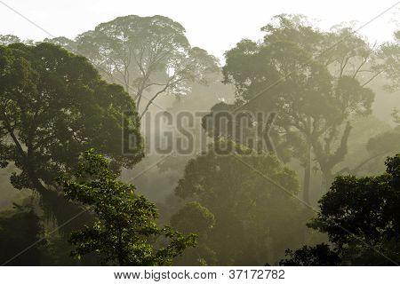 Danum Valley rain forest,Sabah,Borneo
