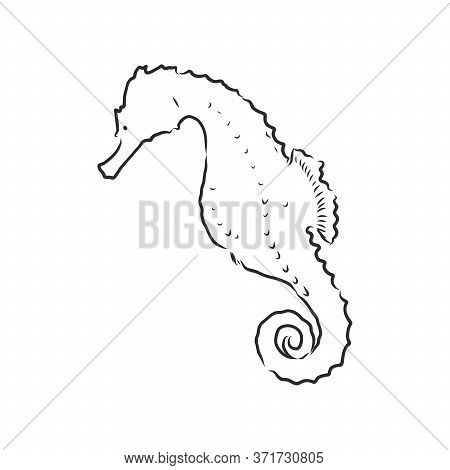 Vector Illustration Of A Seahorse In The Old-fashioned Style And Line-art Style. Seahorse, Vector Sk