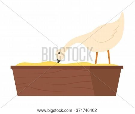 Goose Standing In Wooden Bowl And Eating Grain Or Bean Meal, Side View Of White Farm Animal, Feeding