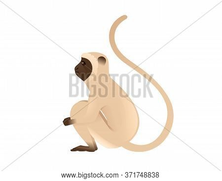 Cute Vervet Monkey Sitting On The Ground Beige Monkey With Brown Face Cartoon Animal Design Flat Vec