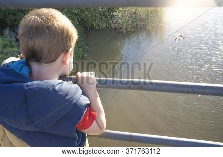 Little Boy Standing On Bridge Observing A Wild Duck Family. Discovering Nature For Children Concept