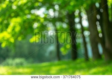 Blurred Summer Spring Background With A Tree In The Rays Of Sunlight In The Fresh Morning. A Natural