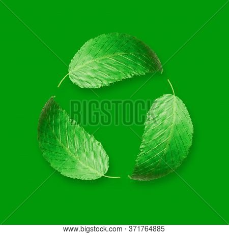Green Leaves In A Circular Motion On A Green Background
