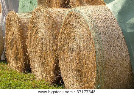 dry golden Hay bales