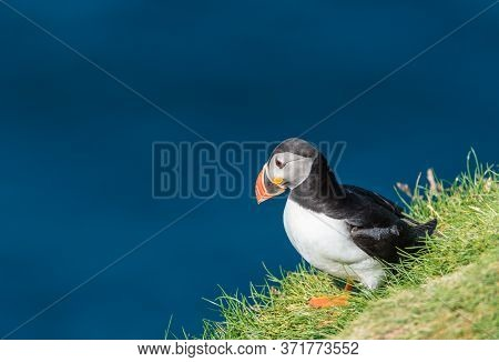 The Atlantic Puffin (fratercula Arctica), Also Known As The Common Puffin, Is A Species Of Seabird I