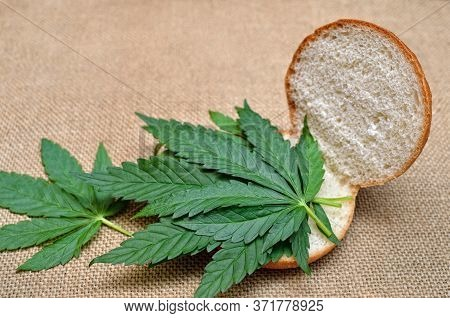 Sandwich Made From Young Leaves Of Cannabis.
