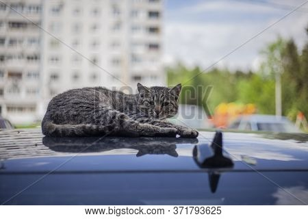 Cat On The Roof Of The Car. The Cat Basks In The Sun. Homeless Animal.