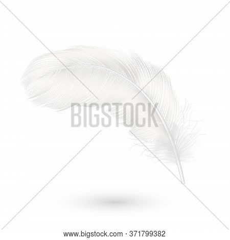 Vector 3d Realistic Falling White Fluffy Twirled Feather Icon Closeup Isolated On White Background.