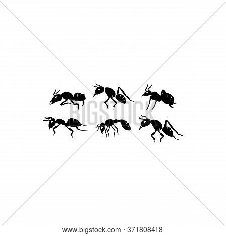 Ant Set Black Insect Silhouettes Trip ,ant Black Teamwork Colony Group