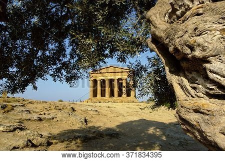 temple of Concordia and olive tree in the Valley of Temples is a Sicily landmark of Unesco architecture in Agrigento