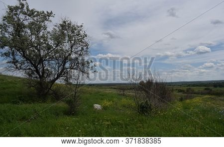 Flowering Steppe In Late Spring With A Rabbitberry Tree And Gypsum Stone.