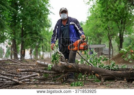 Work With A Chainsaw Conducts Sanitary Felling Of Trees On The City Boulevard. Urban Economy And Acc