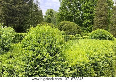 Gardening And Landscaping With Decorative Trees And Plants. Park With Shrubs And Green Lawns.