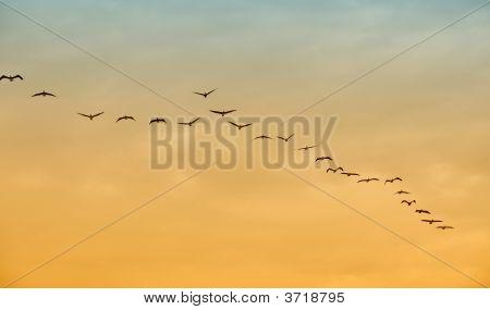 Pássaros em vôo