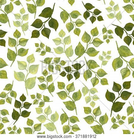Seamless Pattern Of Leaves. Watercolor Green Leafy Twigs Isolated On White. Hand Drawn Round Pointed