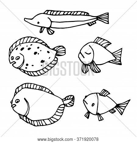 Set Of Funny Fishes, Sturgeon, Flounder, For Decorative Ornaments & Patterns, Vector Illustration Wi